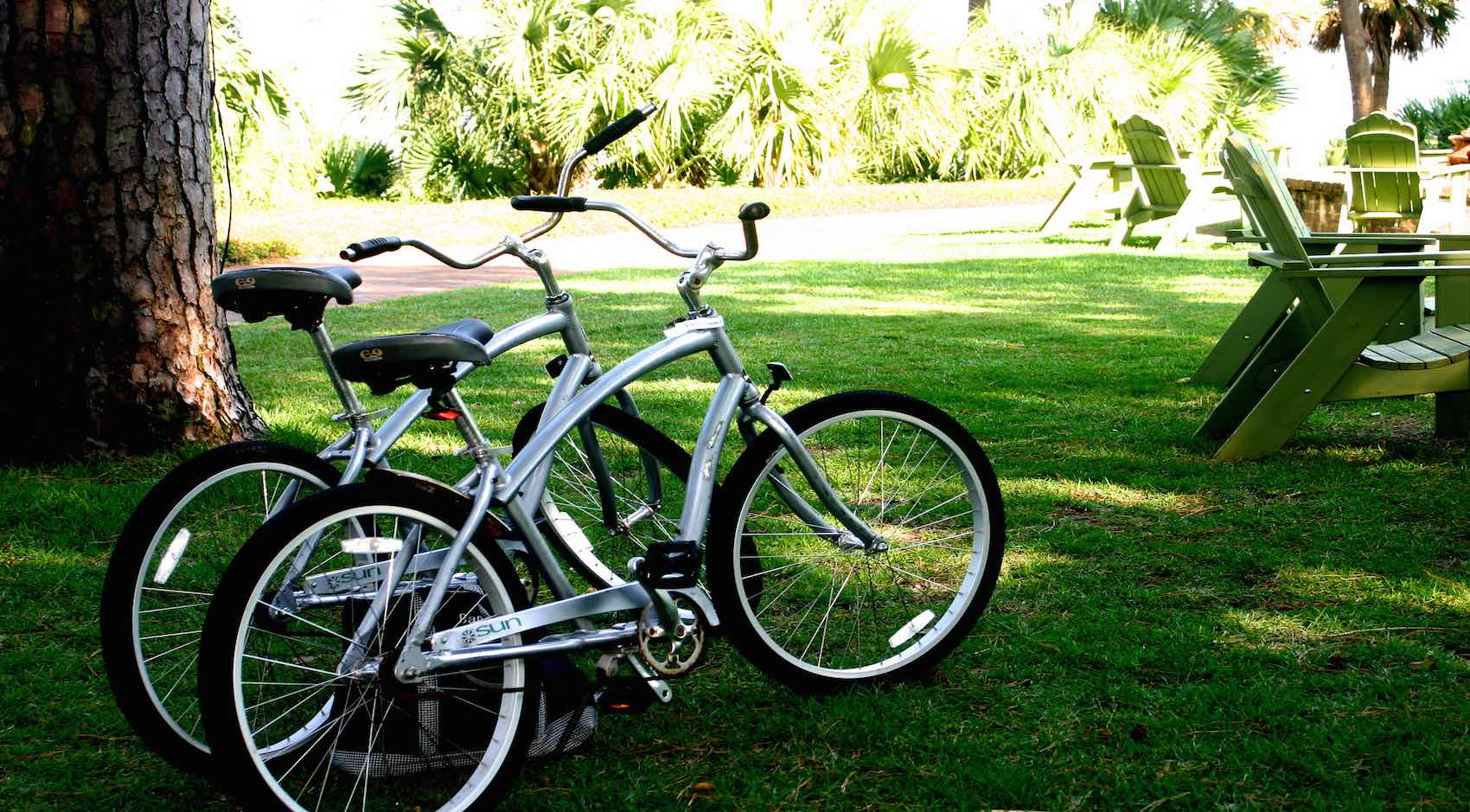 Two bikes by a tree in a park
